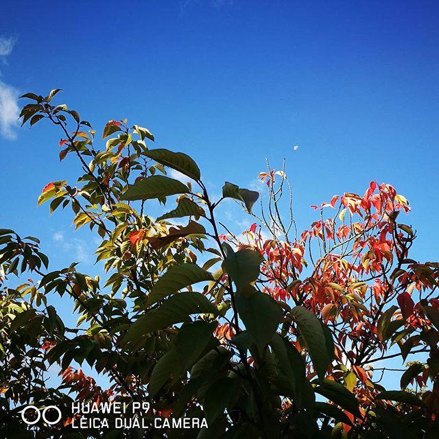 空と月 #huaweip9 #huawei #p9