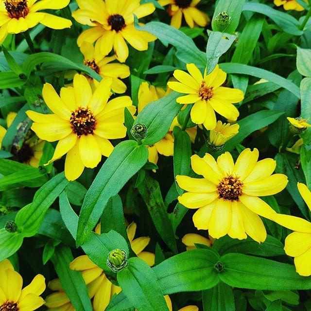 なんて名前の花だろう? #galaxys7 #flowers