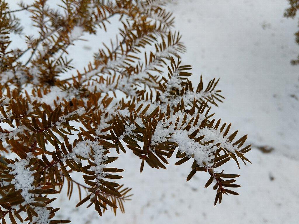 Pixel2で撮影した雪のつもった小枝
